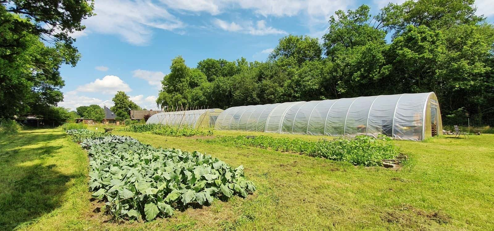 NadU Gesundes Gemüse - Ocholt Howiek